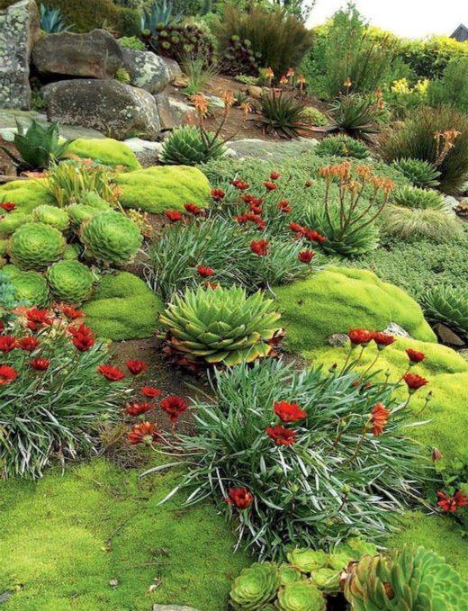 как организовать альпинарий в саду