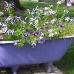 цветник в ванной