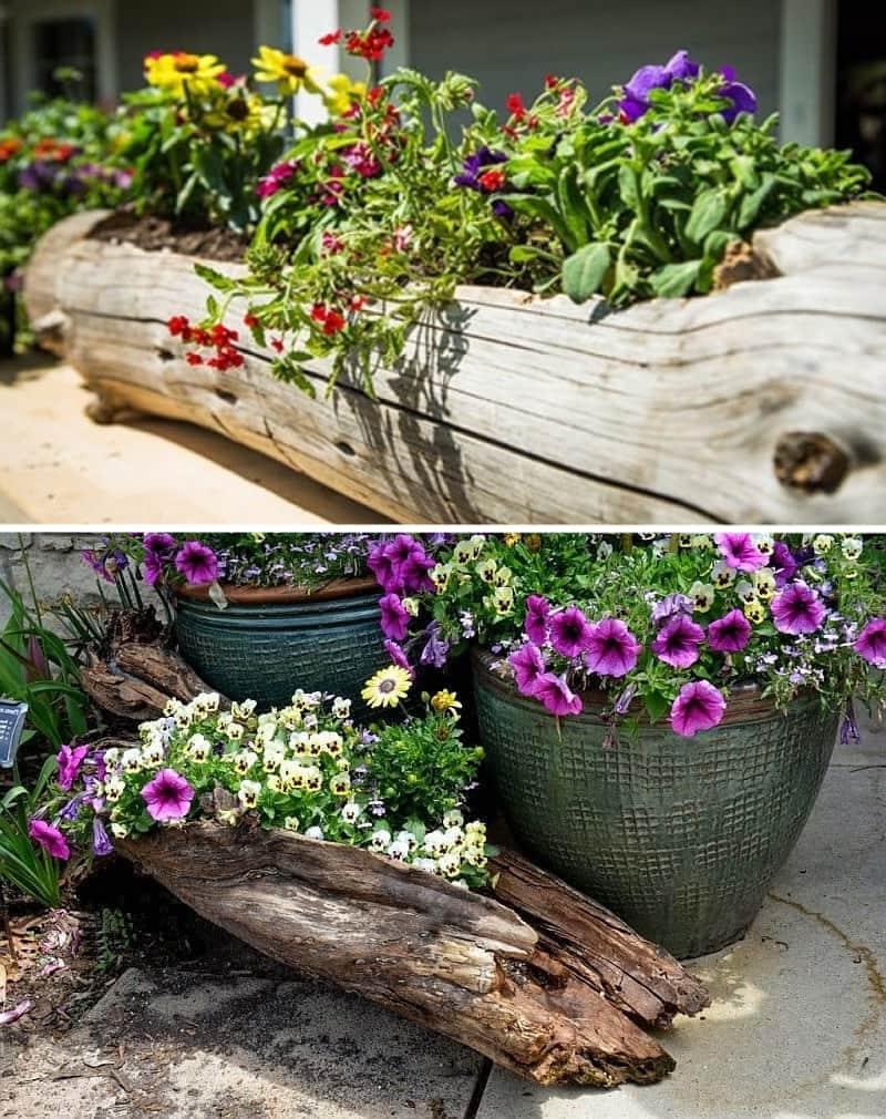 Для клумбы из бревна желательно подобрать среднерослые сорта неприхотливых цветов и растений