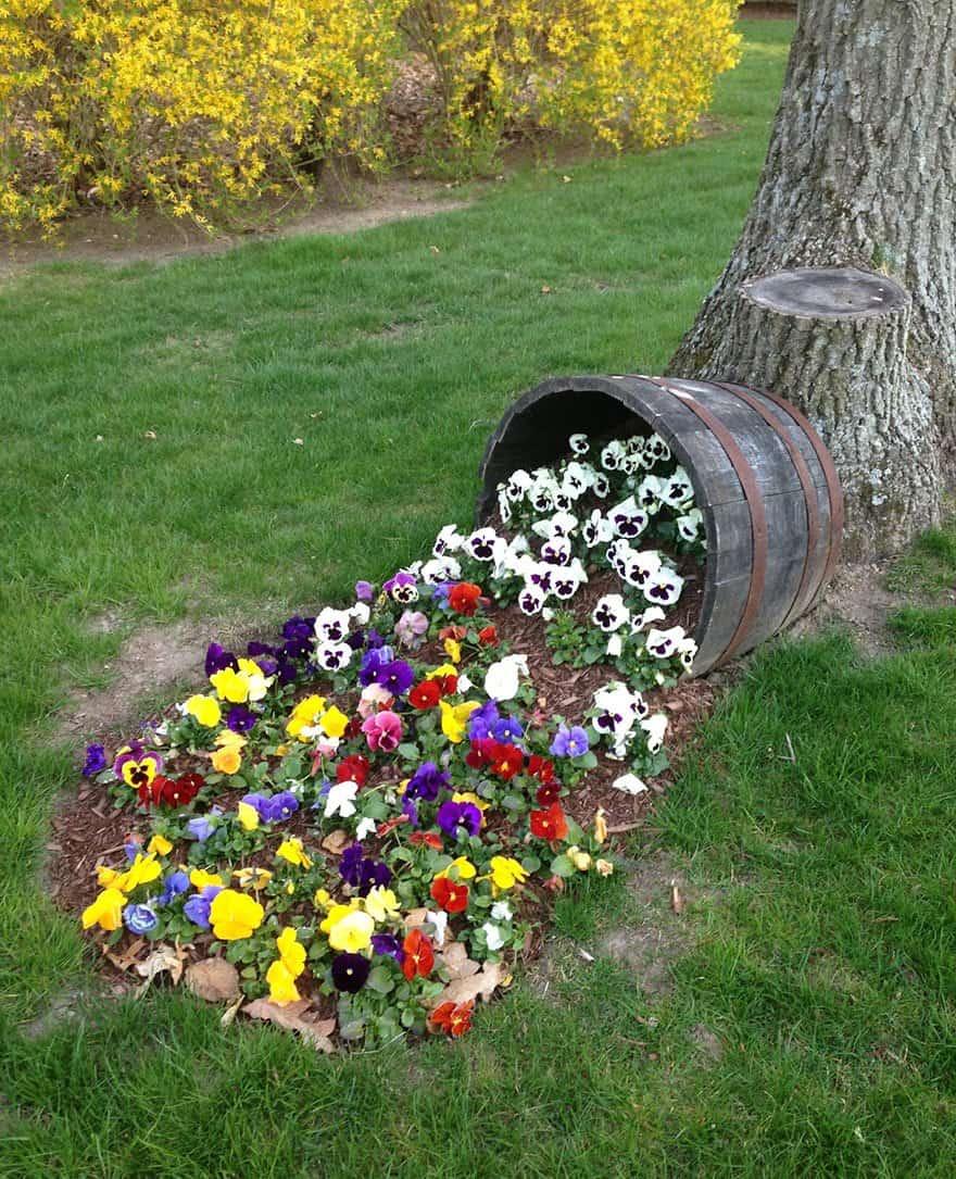 Из старой деревянной бочки распиленной пополам можно сделать оригинальную клумбу в виде рассыпавшихся из горшка земли с цветами