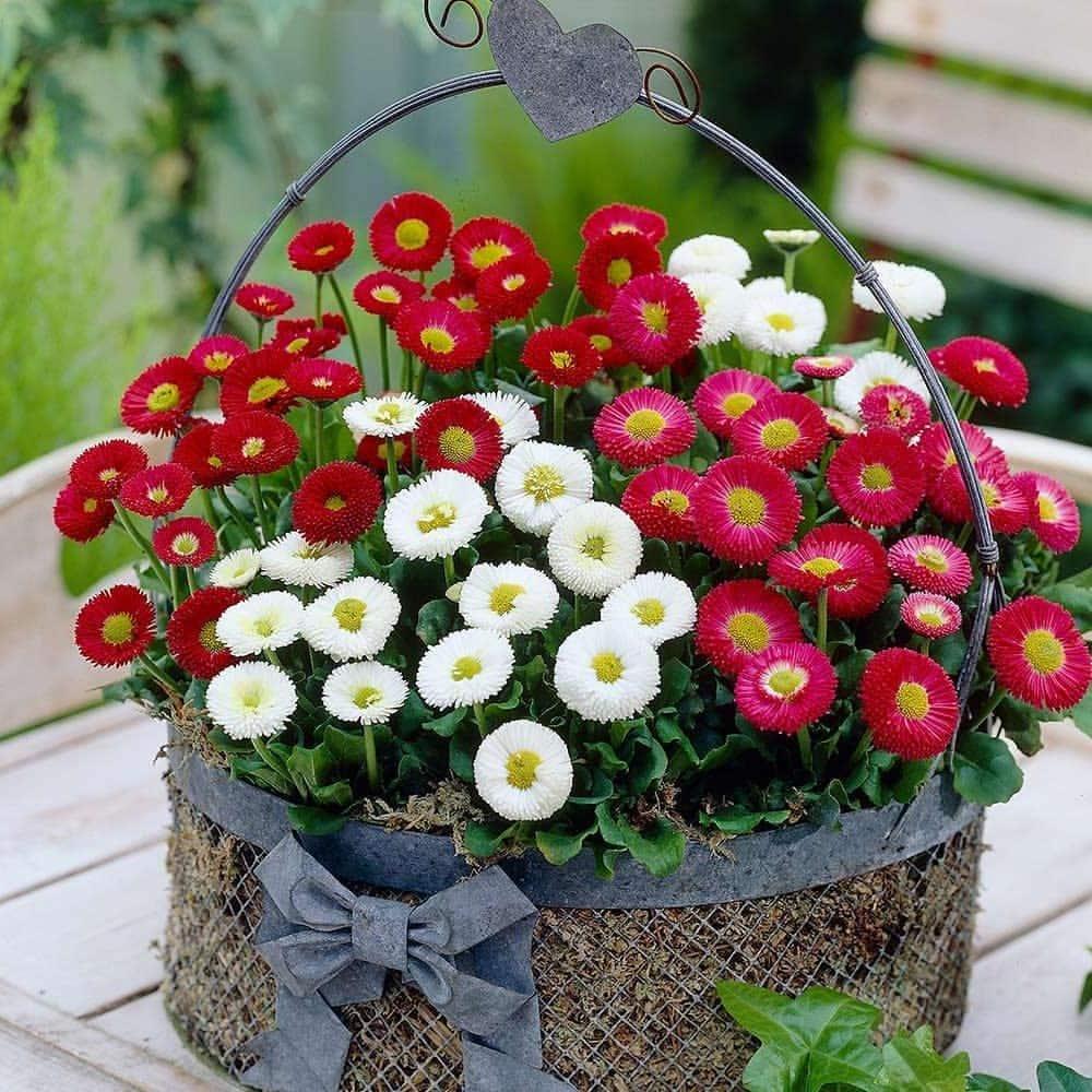 Изящная корзинка с красно-белый цветами прекрасно дополняющими друг друга