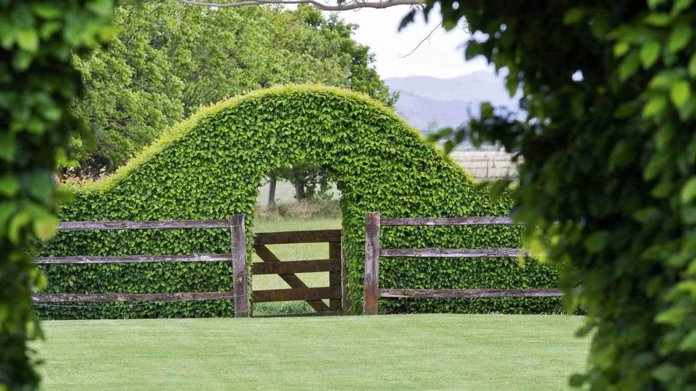 Симпатичный забор с аркой из декоративных растений
