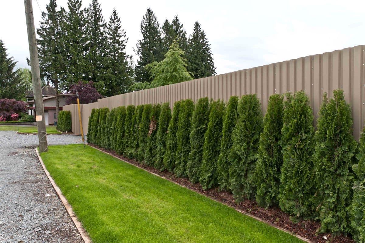Украсить ограду из металлопрофиля можно при помощи зеленых насаждений, таких как туи или пихты