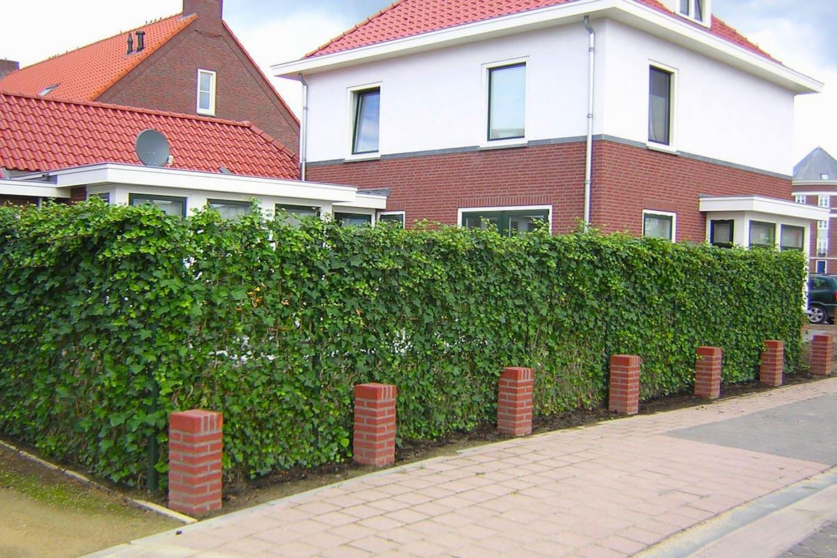 Креативный подход к строительству забора - живая изгородь с миниатюрными кирпичными колоннами
