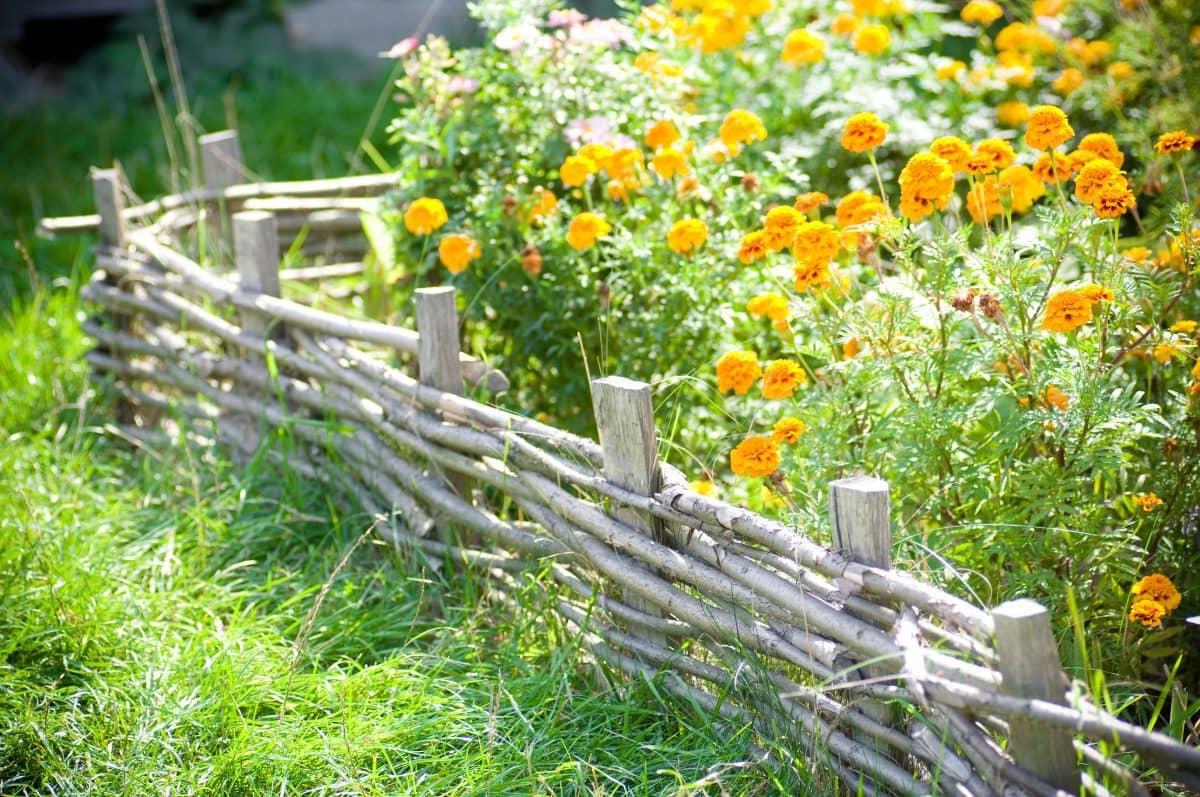 С такой живописной клумбой ваш сад заиграет новыми красками