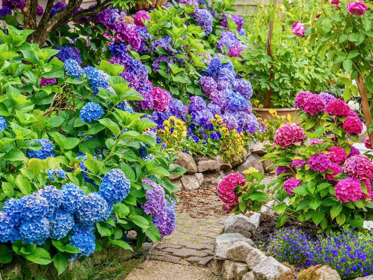 Настоящее буйство красок в саду