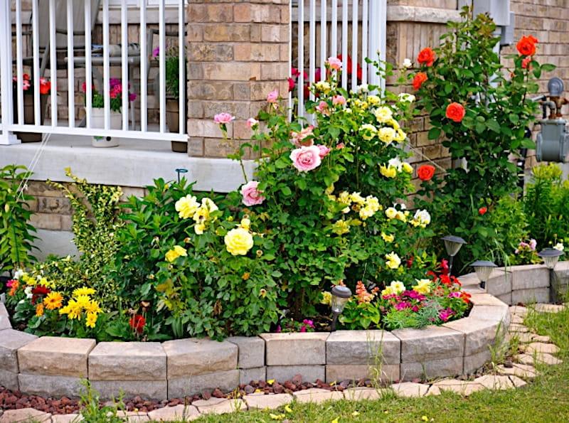 Розы перед террасой
