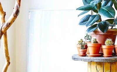 цветы и растения в интерьере