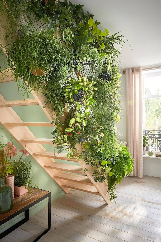 комнатные растения в интерьере фото 23