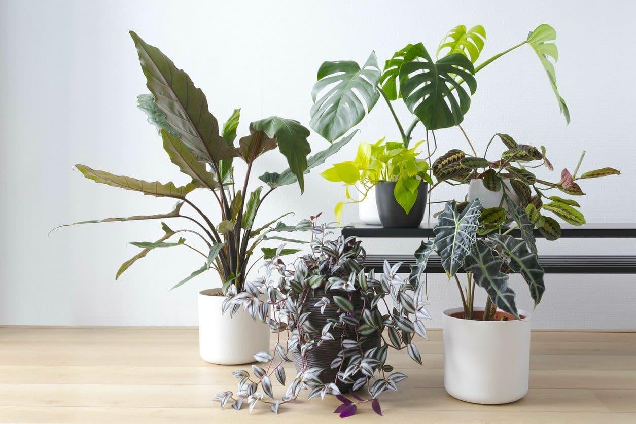 комнатные растения в интерьере фото 46