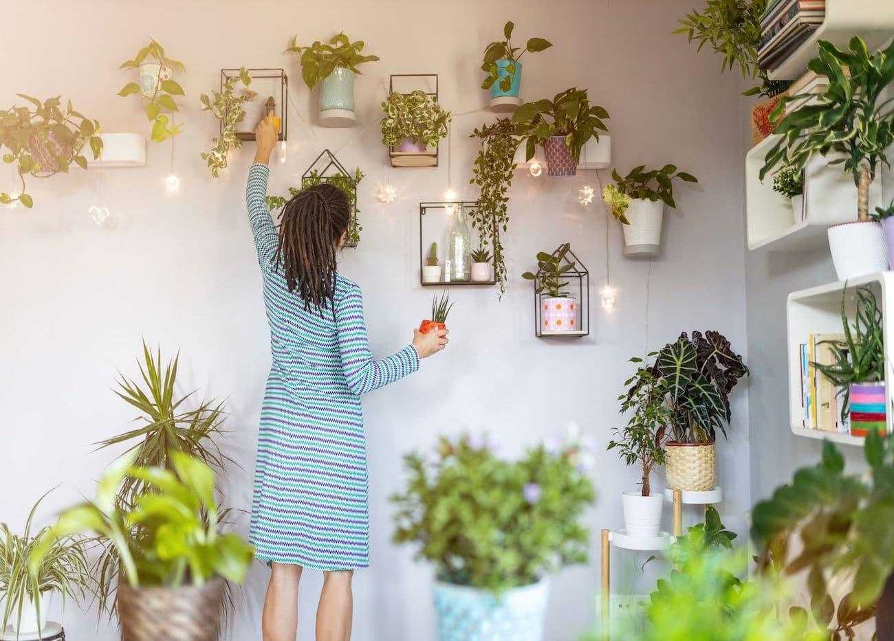 комнатные растения в интерьере фото 12
