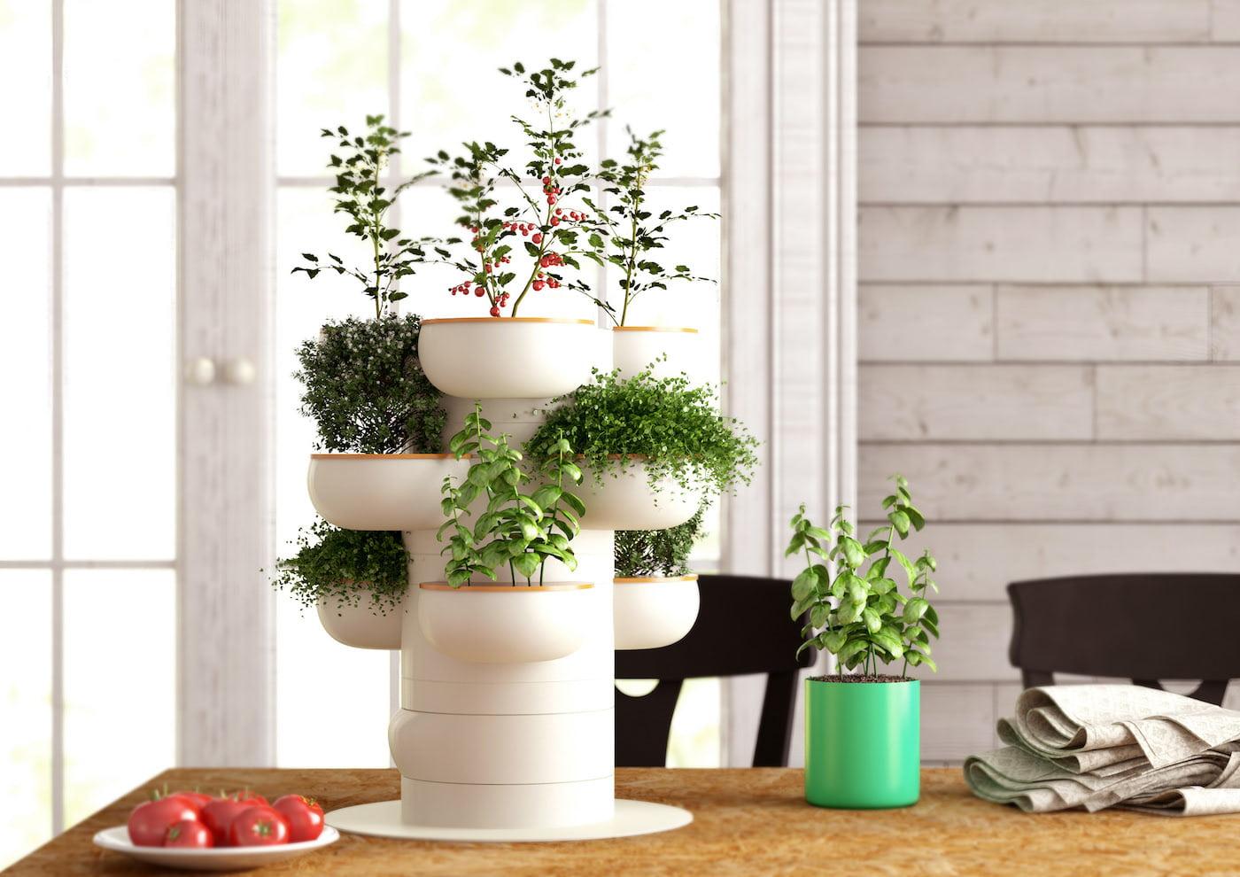 комнатные растения в интерьере фото 20