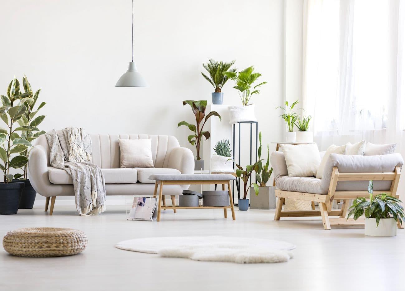 комнатные растения в интерьере фото 21