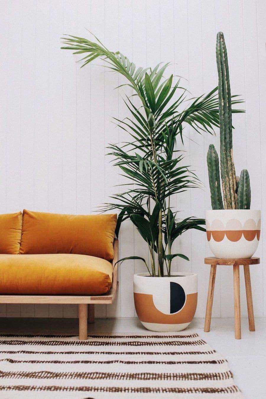 комнатные растения в интерьере фото 16