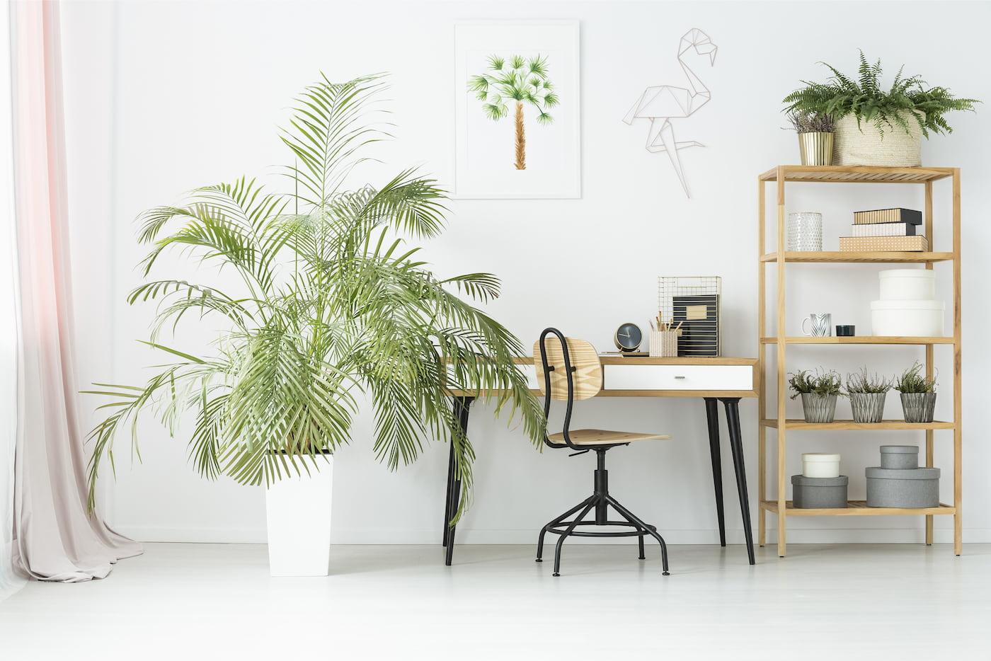 комнатные растения в интерьере фото 55