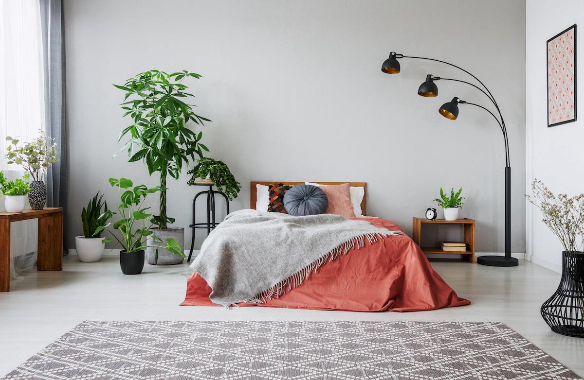 комнатные растения в интерьере фото 38