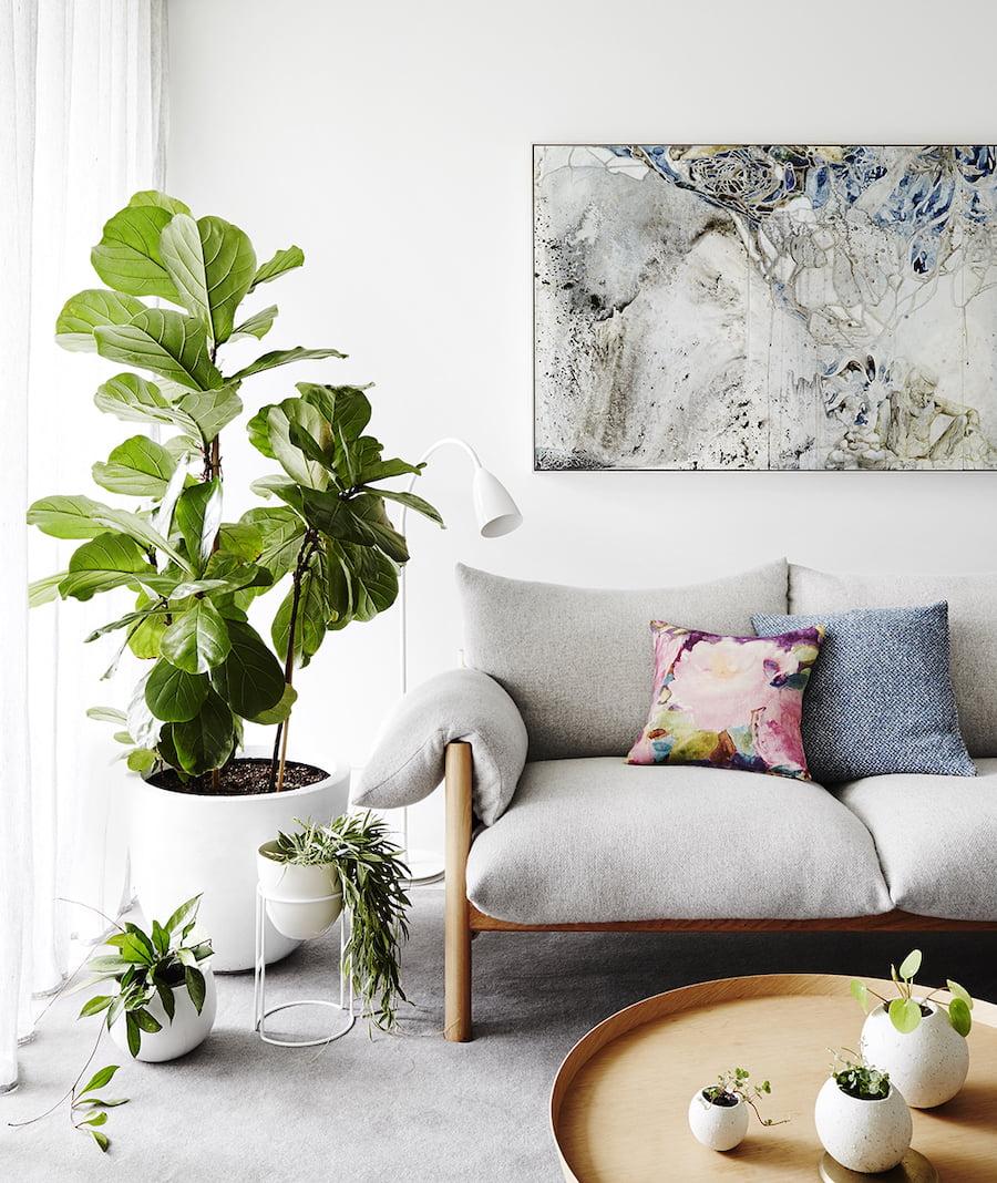 комнатные растения в интерьере фото 15