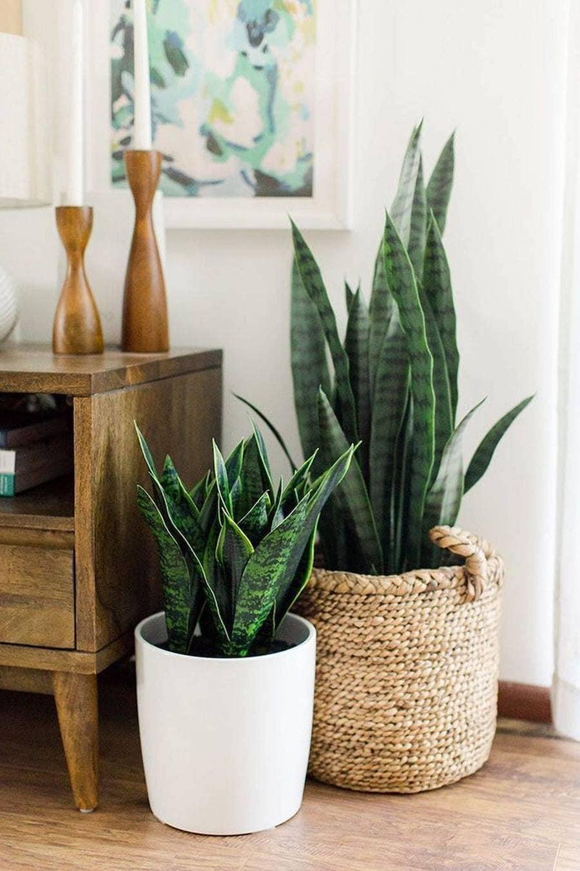 комнатные растения в интерьере фото 50