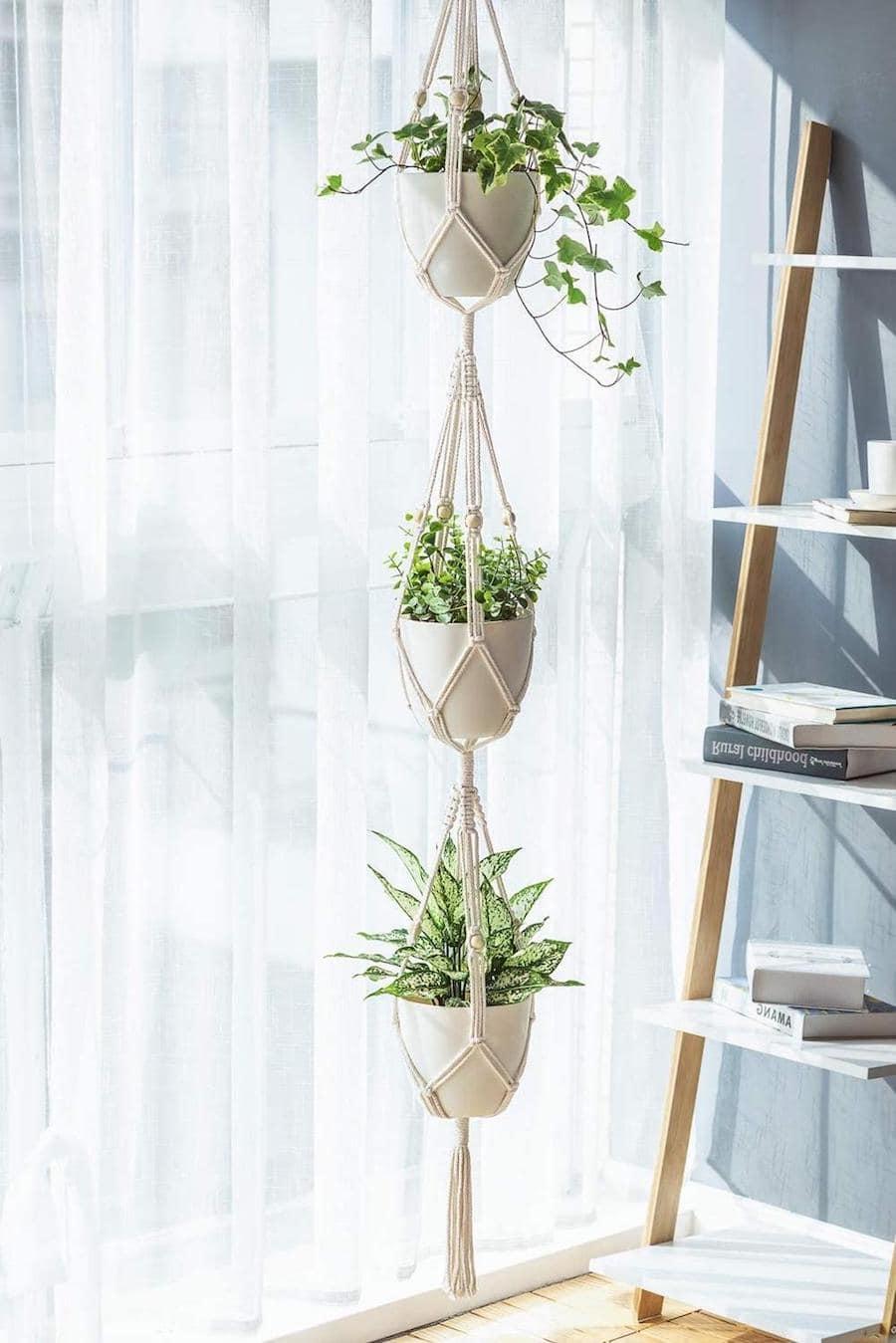 комнатные растения в интерьере фото 3