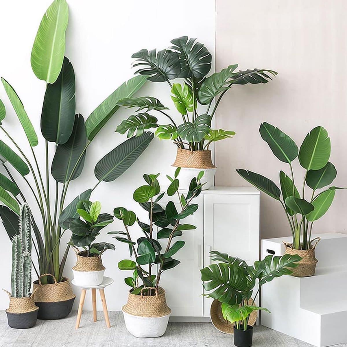 комнатные растения в интерьере фото 48