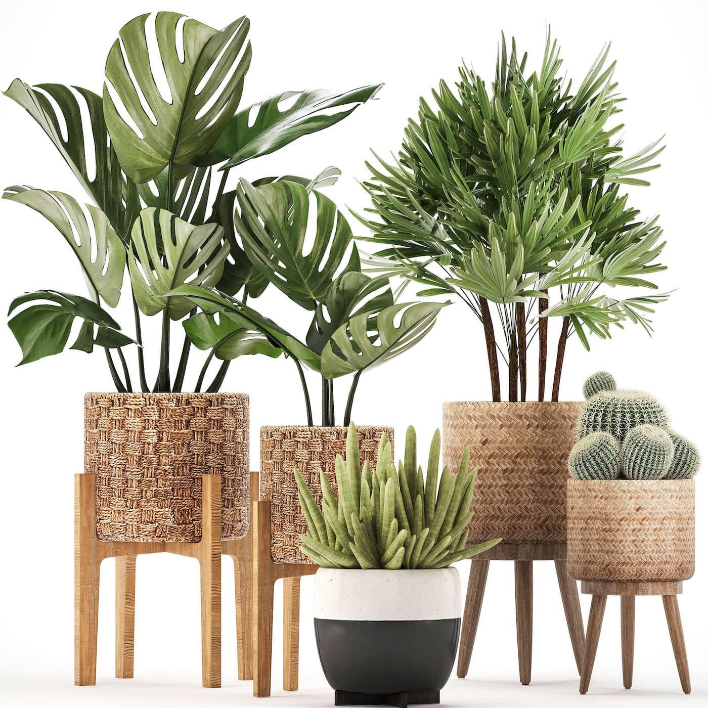 комнатные растения в интерьере фото 10