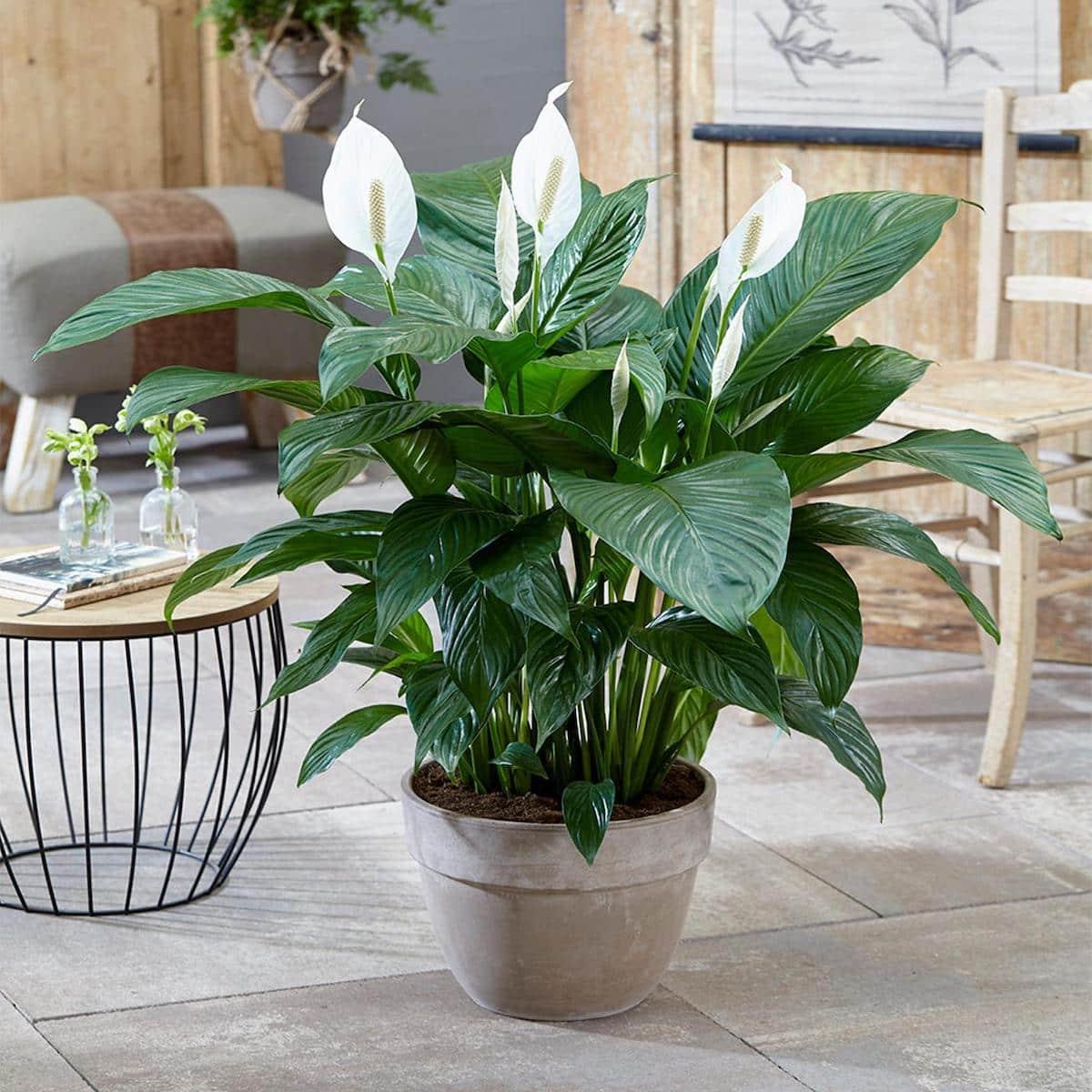 комнатные растения в интерьере фото 54