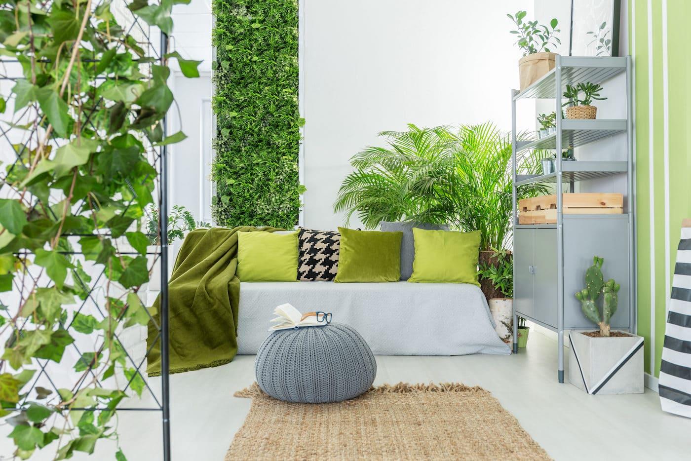 комнатные растения в интерьере фото 24