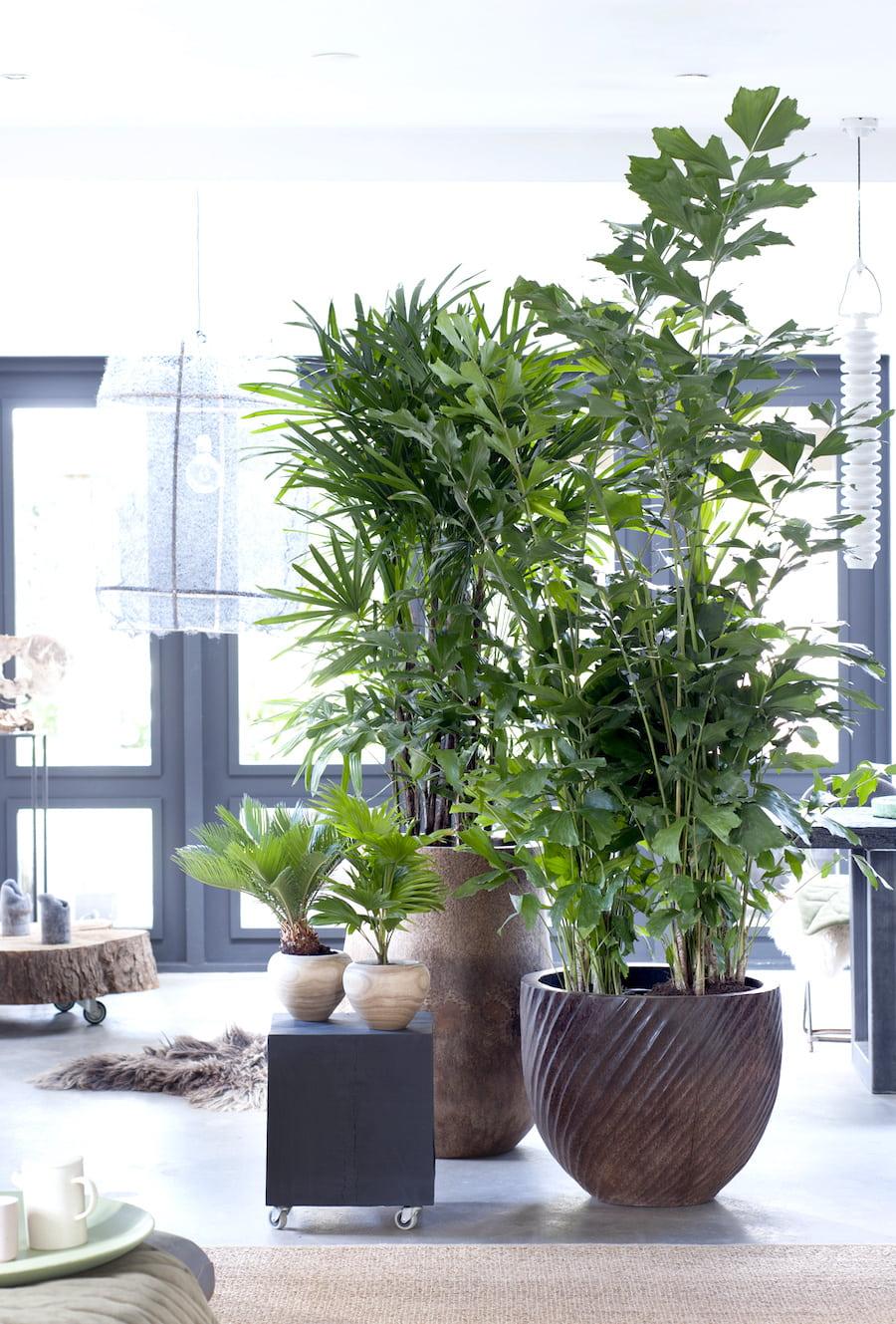 комнатные растения в интерьере фото 26