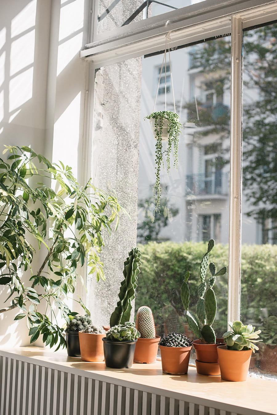 комнатные растения в интерьере фото 17