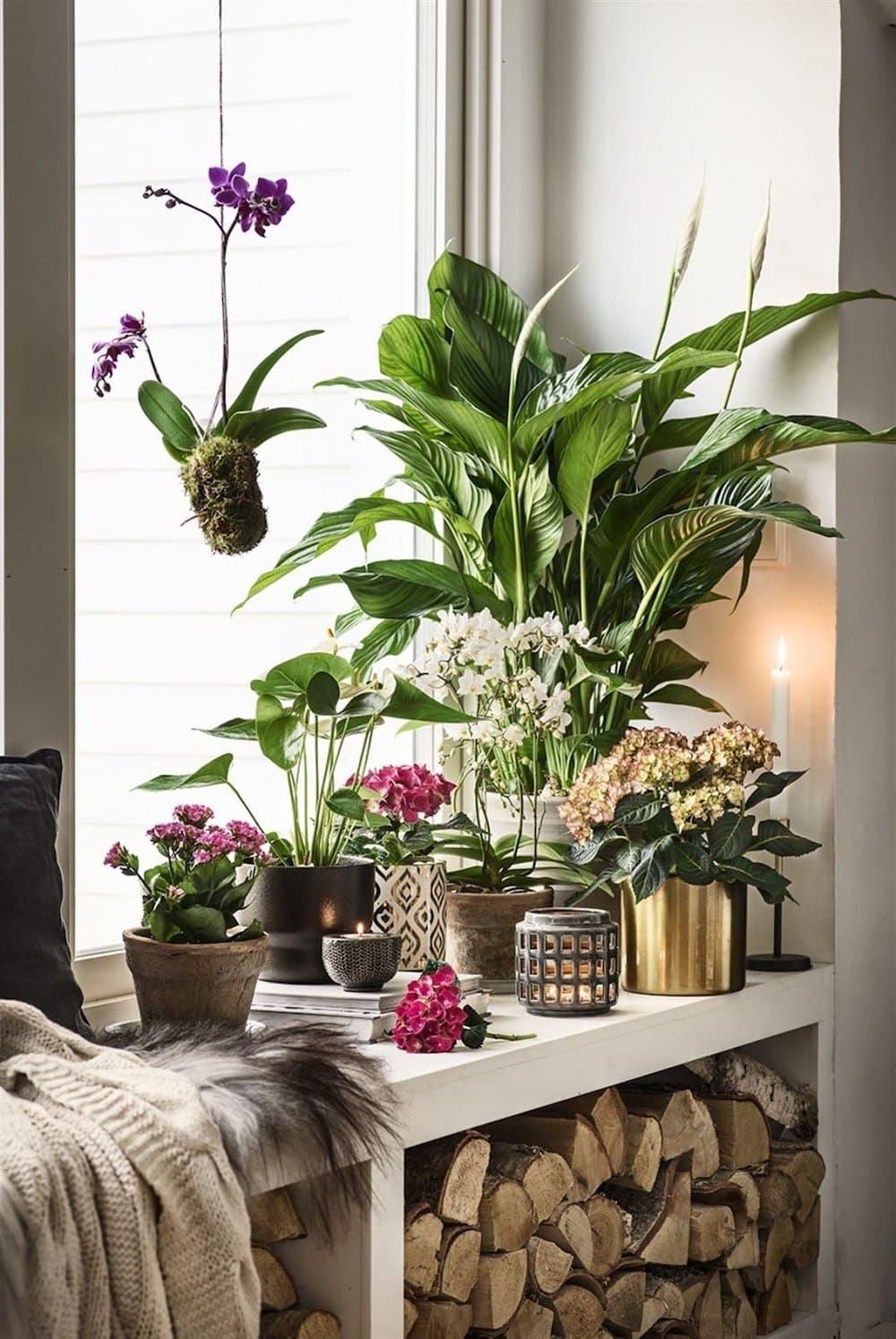 комнатные растения в интерьере фото 18