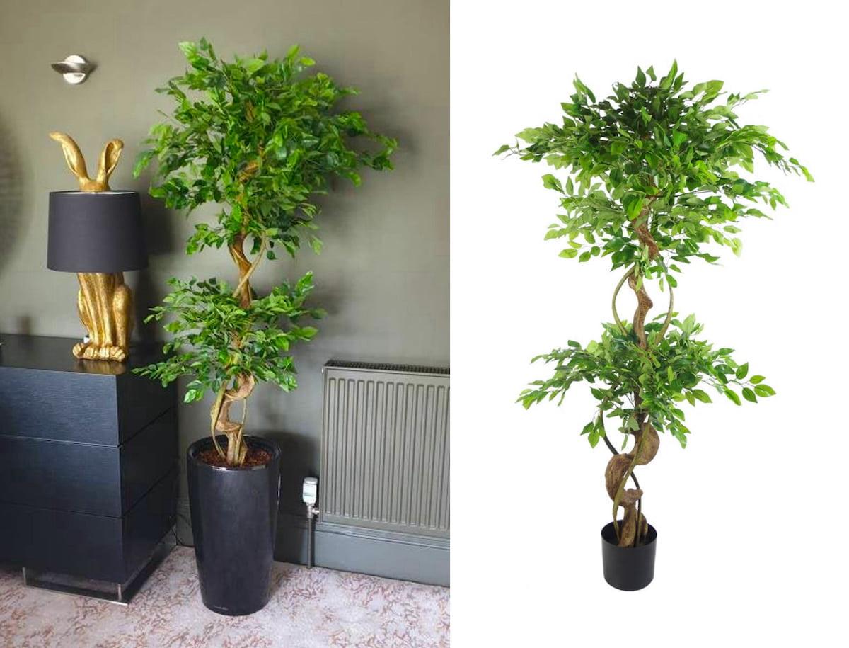 комнатные растения в интерьере фото 9