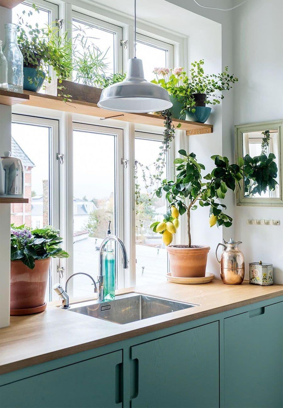 комнатные растения в интерьере фото 34