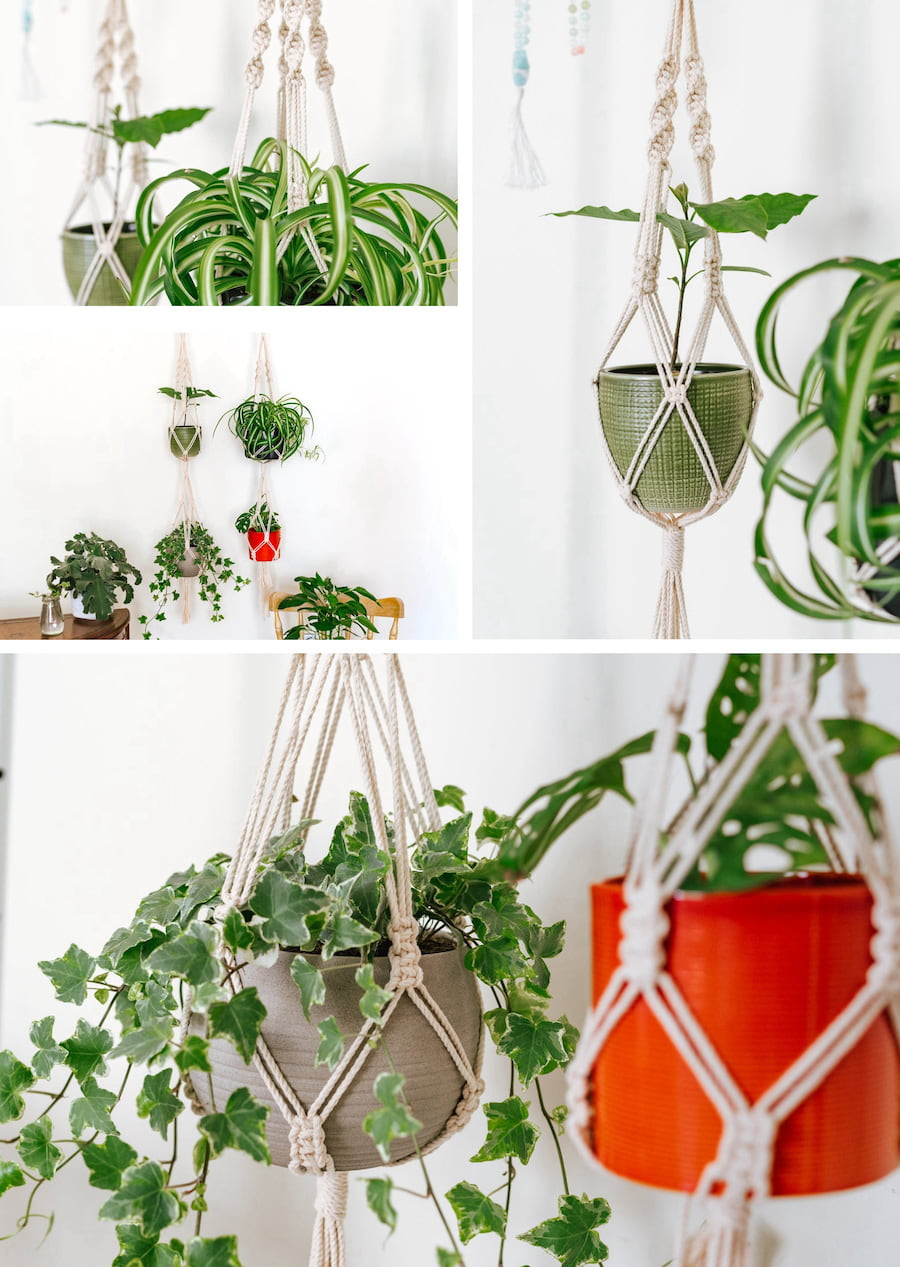 комнатные растения в интерьере фото 2