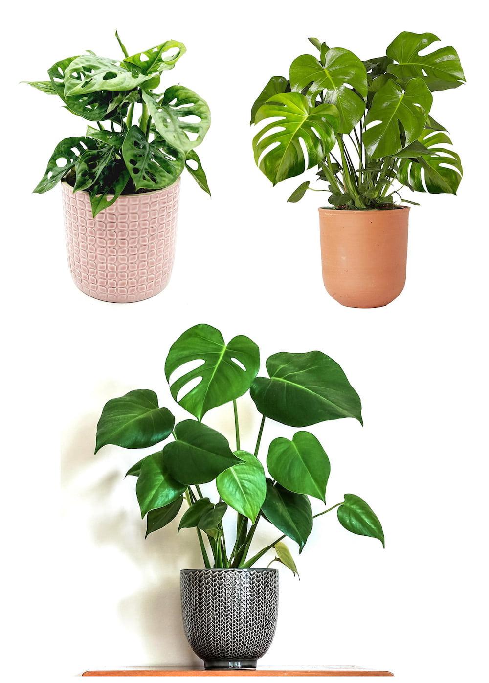 комнатные растения в интерьере фото 14