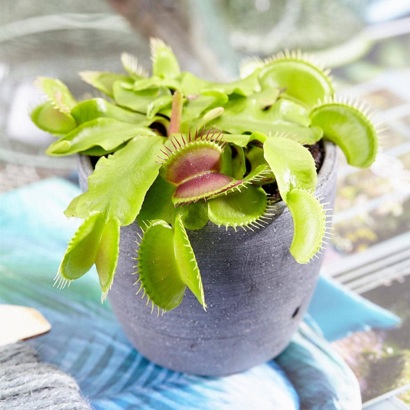 комнатные растения в интерьере фото 8