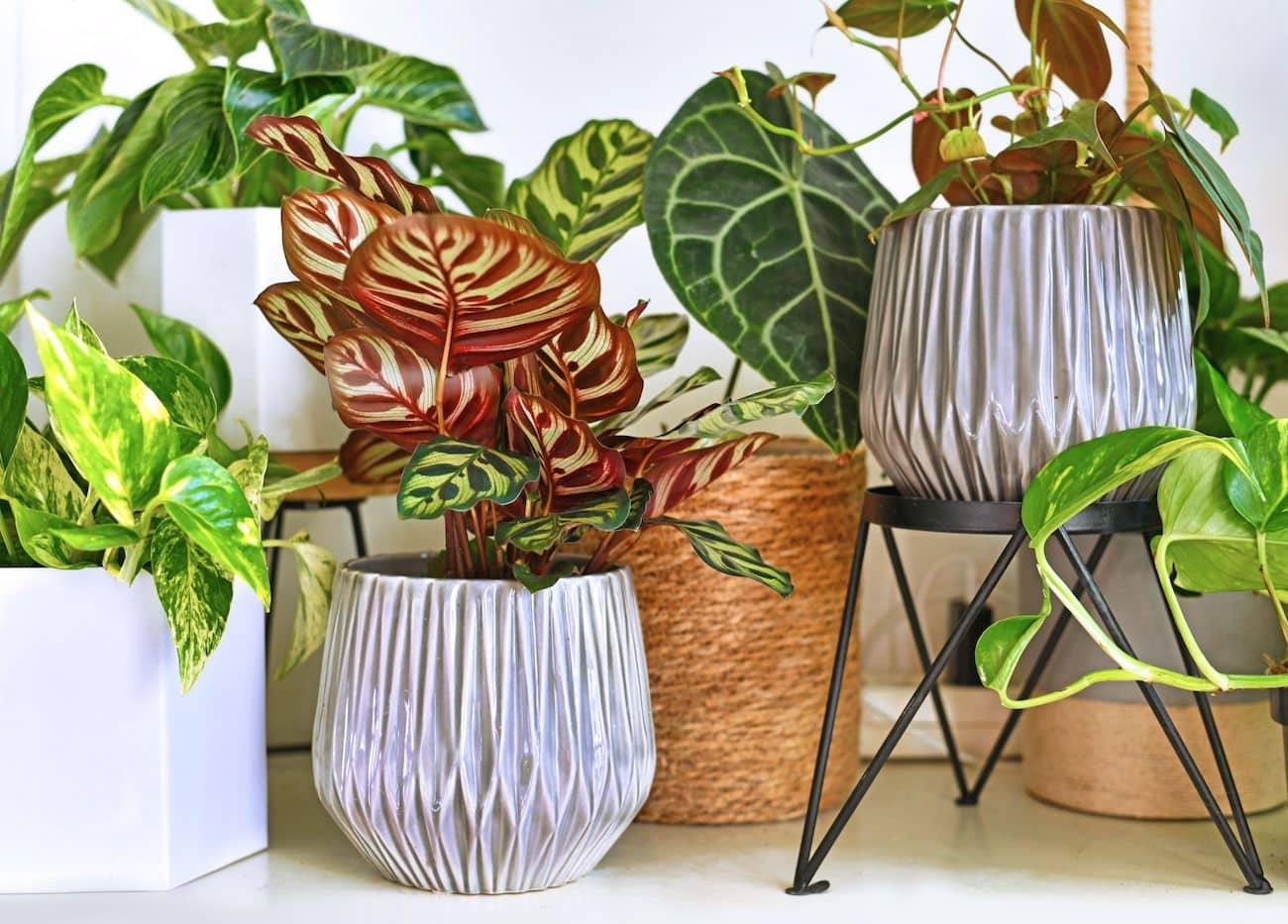 комнатные растения в интерьере фото 7