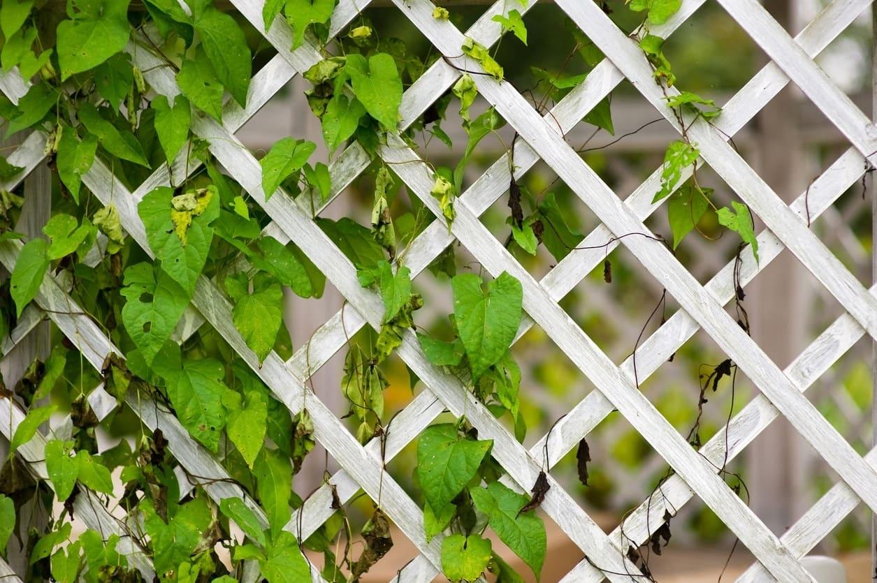 красивый деревянный забор фото 52