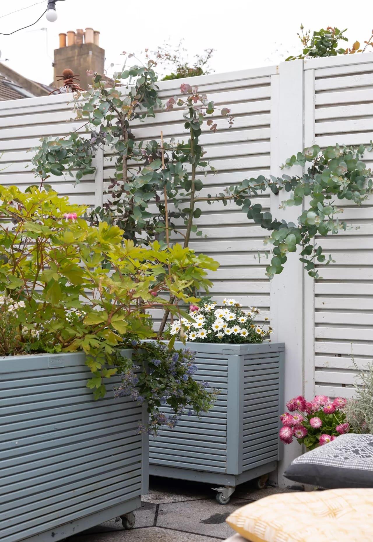 красивый сад частного дома фото 62