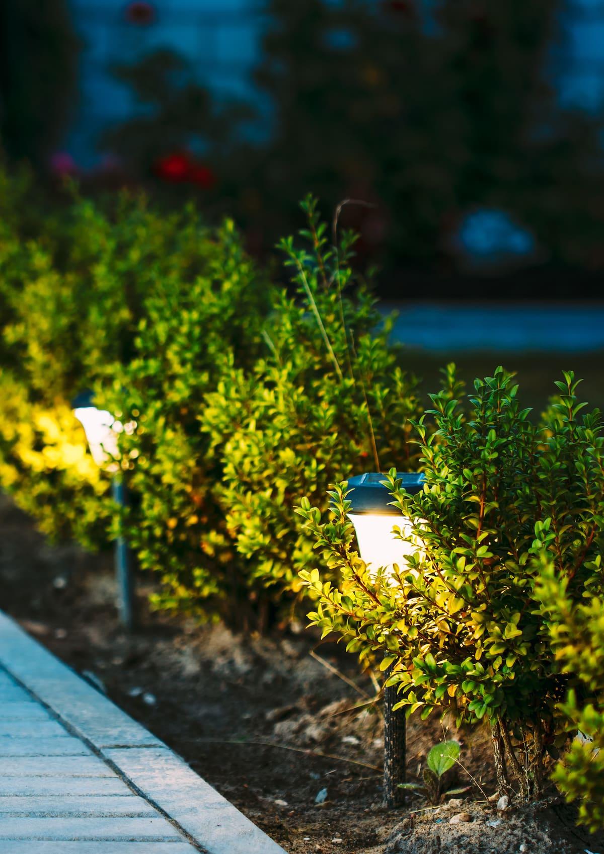 красивый сад частного дома фото 74